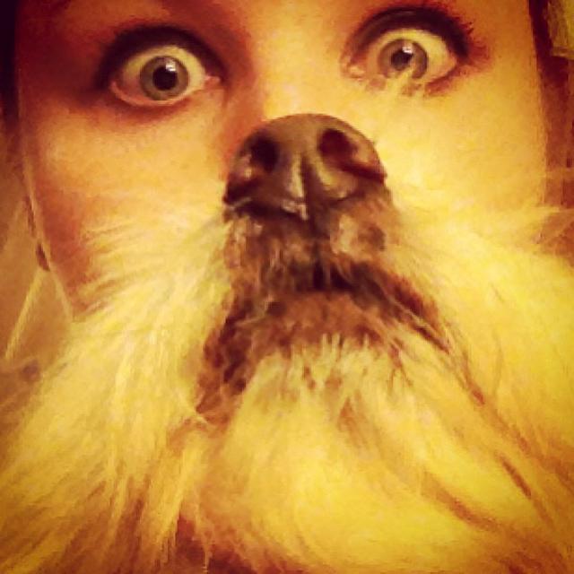 dogbeards3